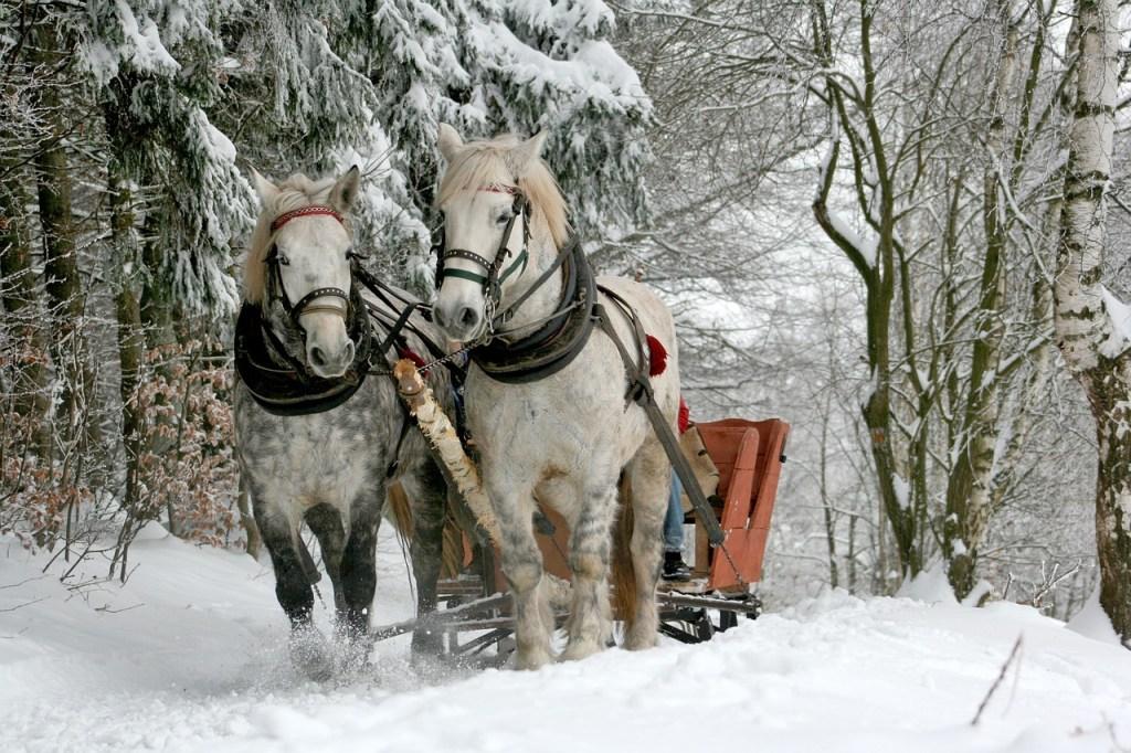 Winter Sleigh Ride Winter Scene