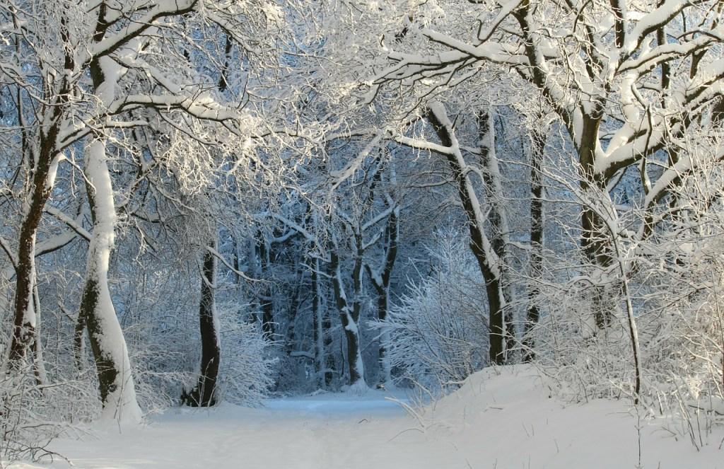 Wintry Forest Winter Scene