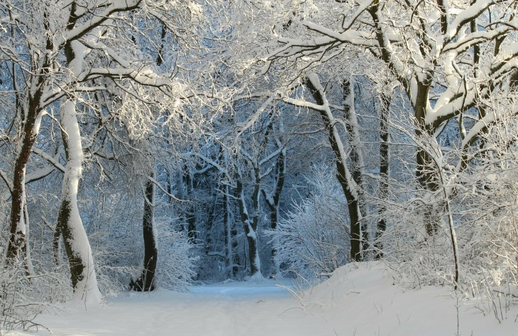 Wintry Forest Winter Scene