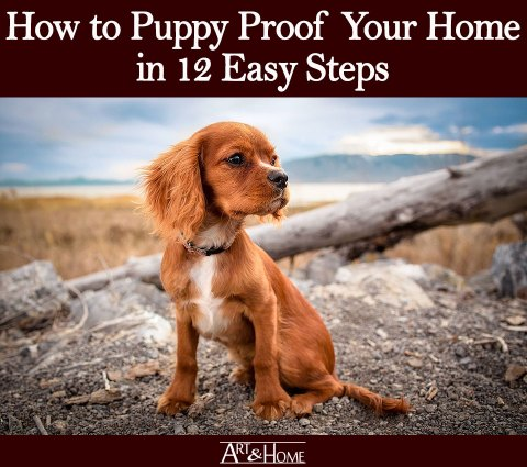 How to Puppy Proof Your Home | Control Your Poisons