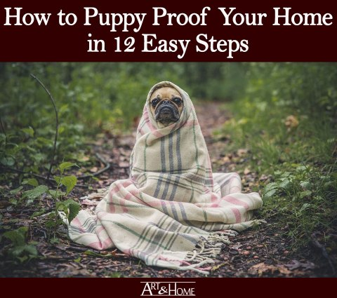 How to Puppy Proof Your Home | Protect Your Furniture