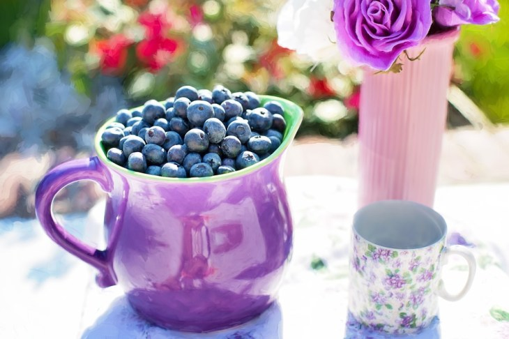 Blueberries by the Pitcher