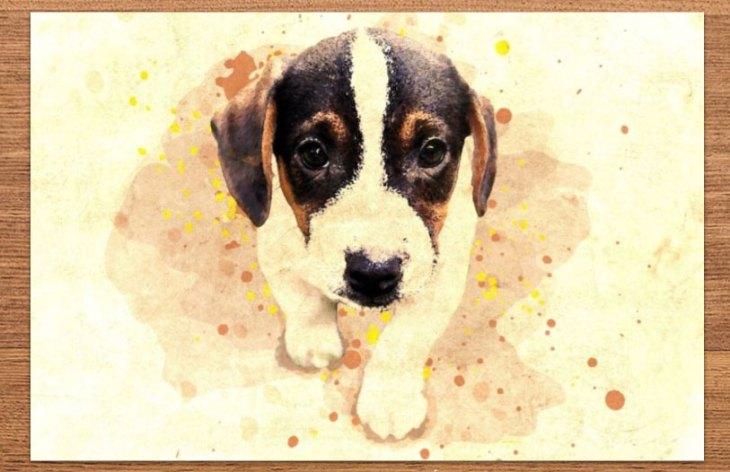 Pet Photo Art Poster Print