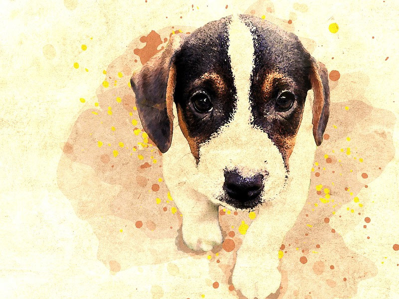 Turning Your Pet Photos Into Art