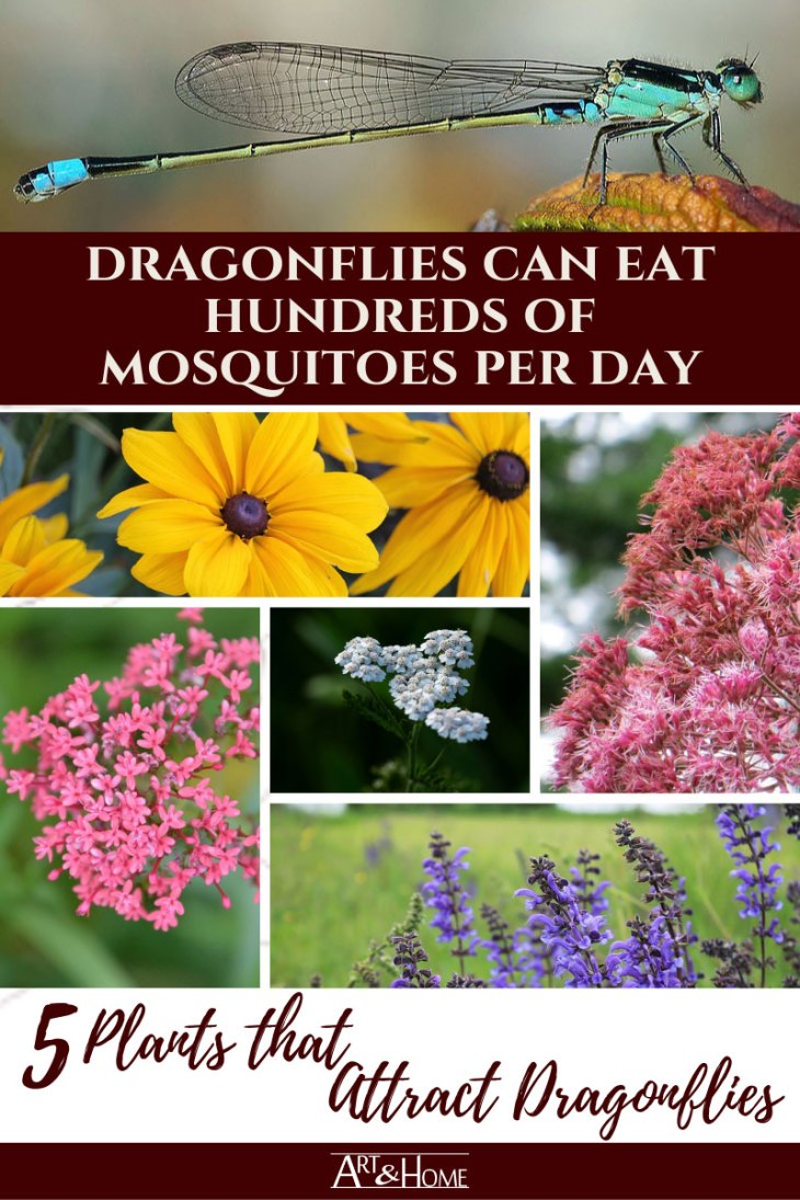 5 Plants that Attract Mosquito-Eating Dragonflies