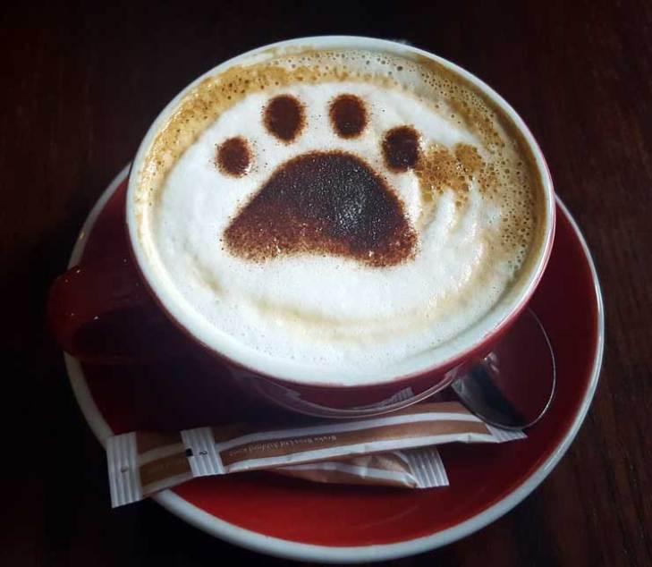 Bear Paw Latte Art