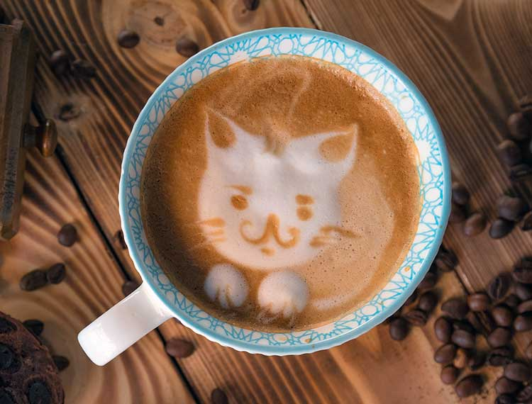 Kitten Face Latte Art