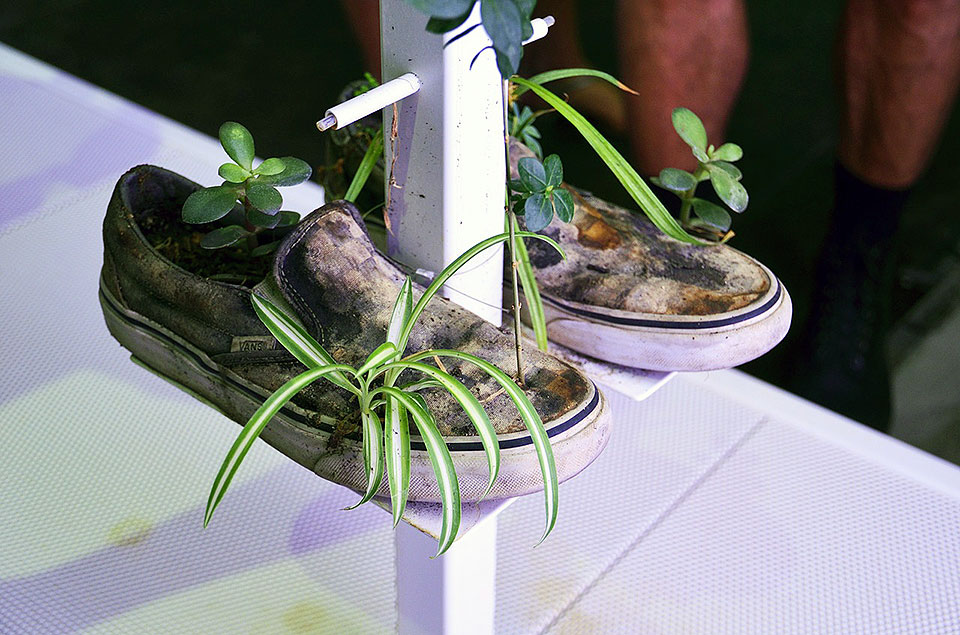 Old Sneakers Turned into a Plant Shelf