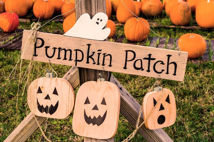 Take the Family to Visit a Pumpkin Patch