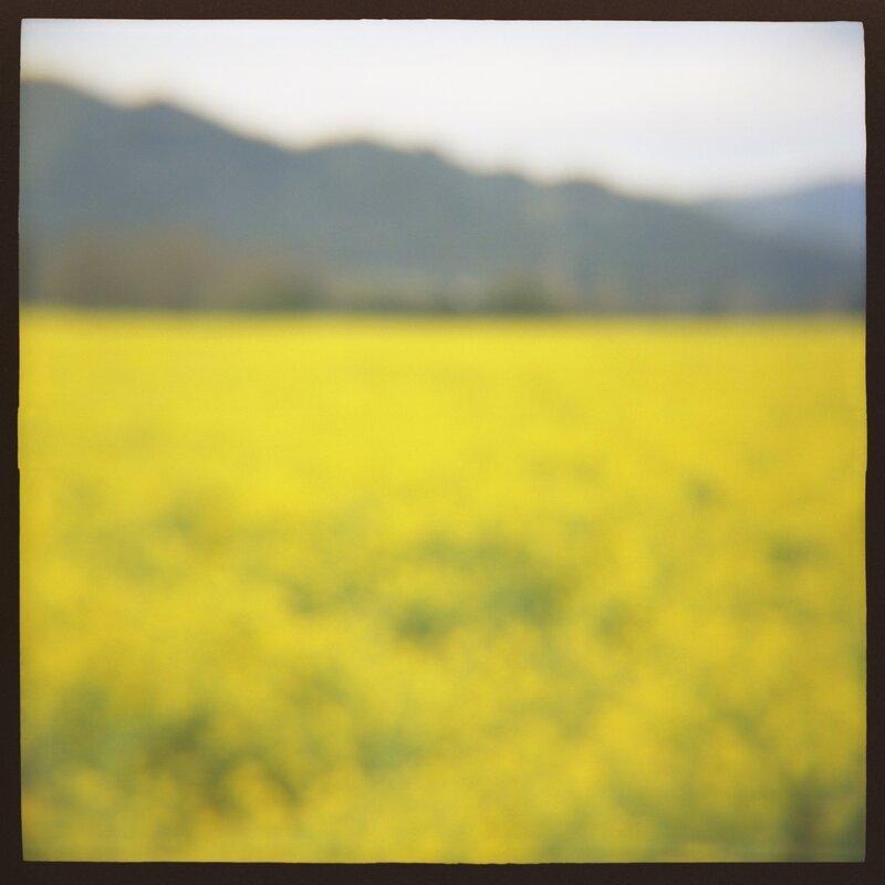 04 Mustard Daniel Grant Photographic Print