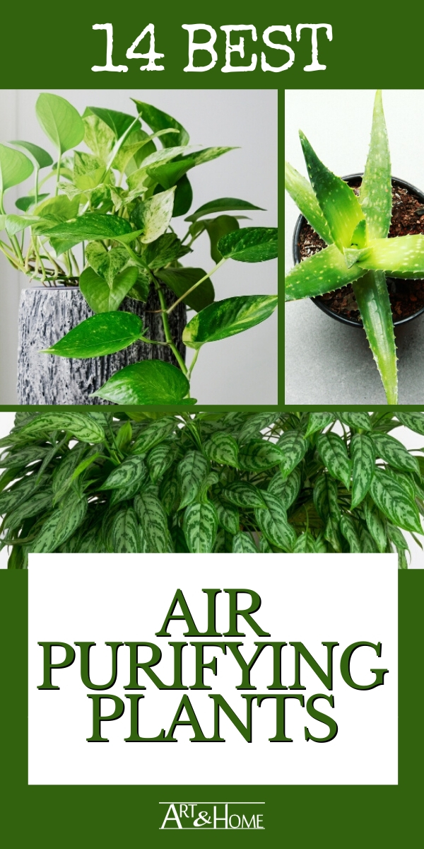 More than just adding a splash of living decor to your home, houseplants can make your indoor air healthier. Here are 14 of the best air purifying plants.