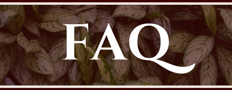 Air Purifying Plants FAQ