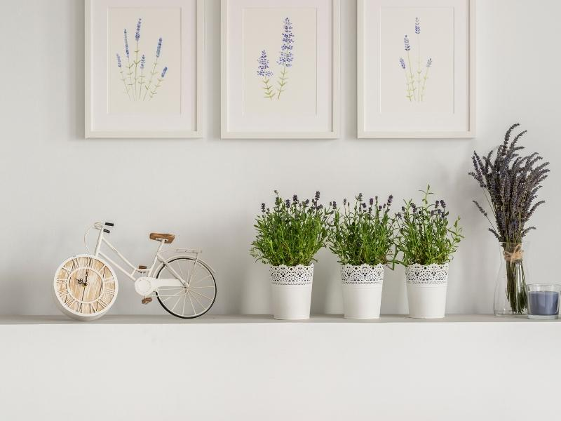 Best Air Purifying Houseplants for Your Home | Lavender