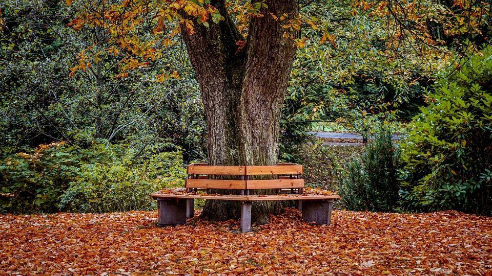 Add a Tree Bench