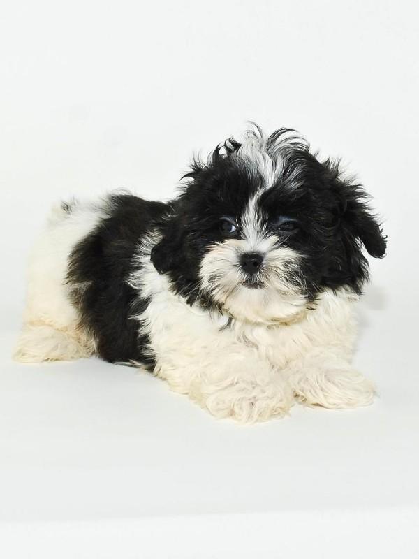 Cute Grumpy Puppy