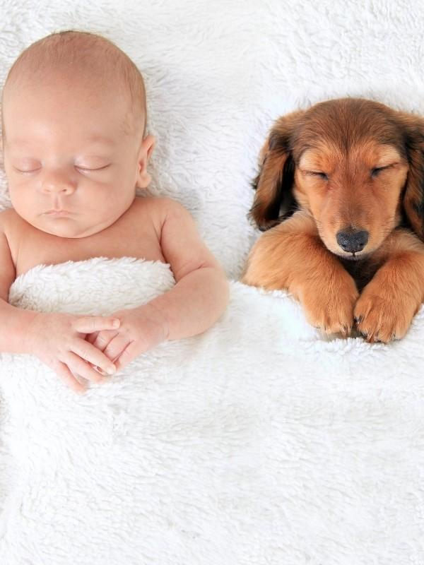 Dachshund Puppy Sleeping With Baby