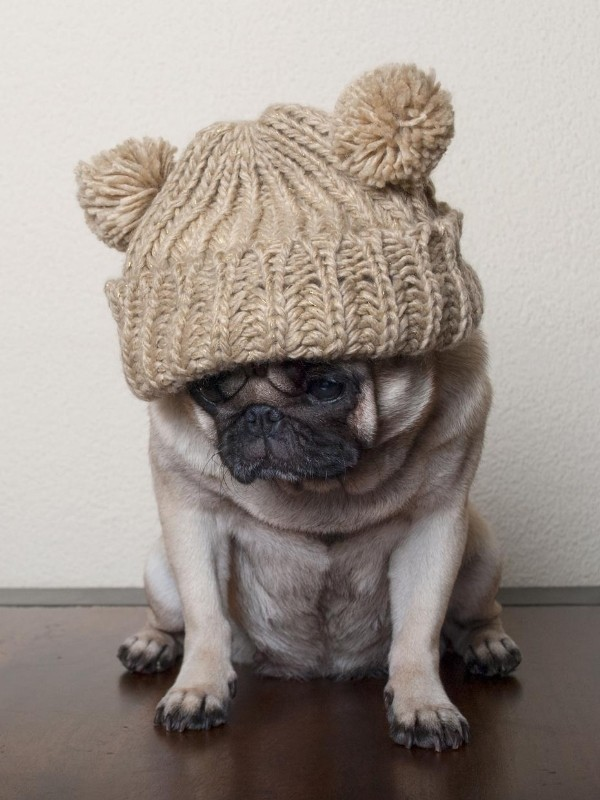 Grumpy Puppy Wearing a Hat