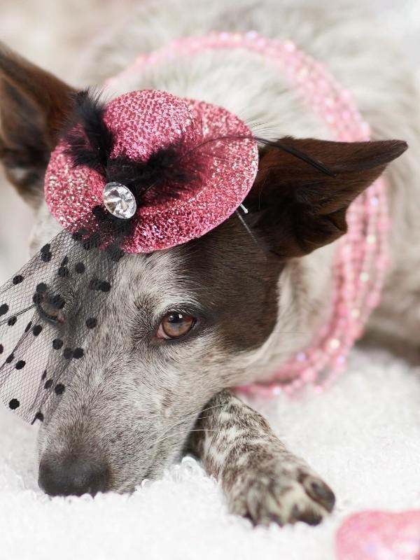 Puppy Wearing a Fancy Hat