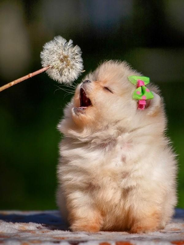 Puppy with Dandelion