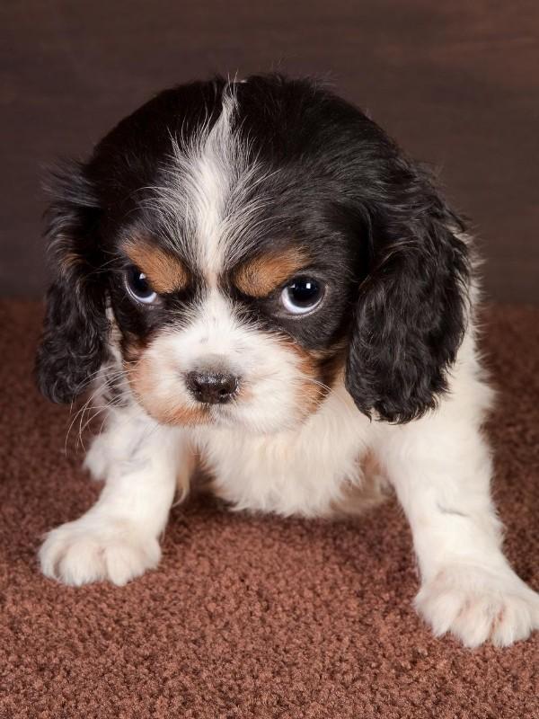 Very Grumpy Puppy
