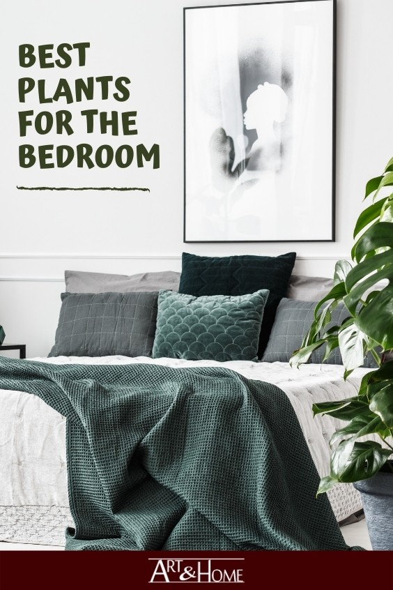 Best Air Purifying Plants for the Bedroom. #HomeDecor #HomeDIY #Plants #Houseplants #BedroomPlants #EasyPlants #BedroomDecor