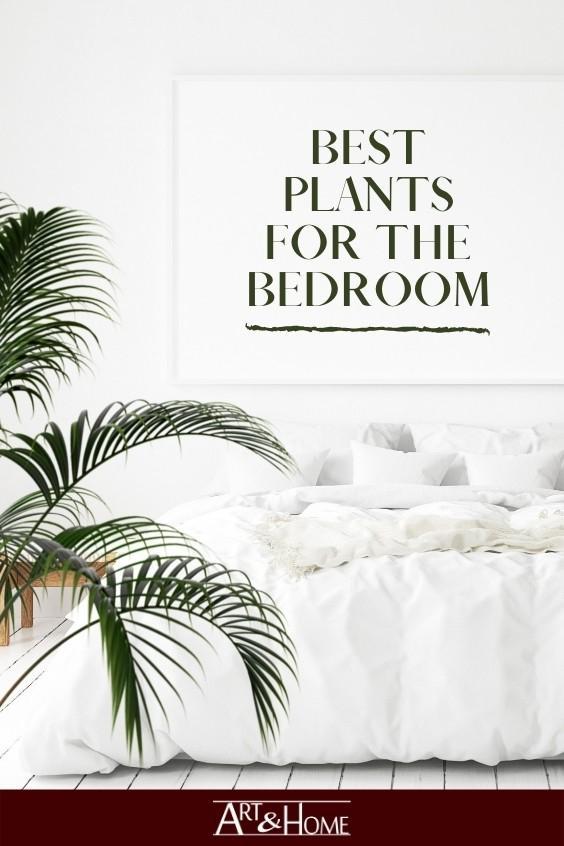 Best Plants for the Bedroom. #HomeDecor #HomeDIY #Plants #Houseplants #BedroomPlants #EasyPlants #BedroomDecor