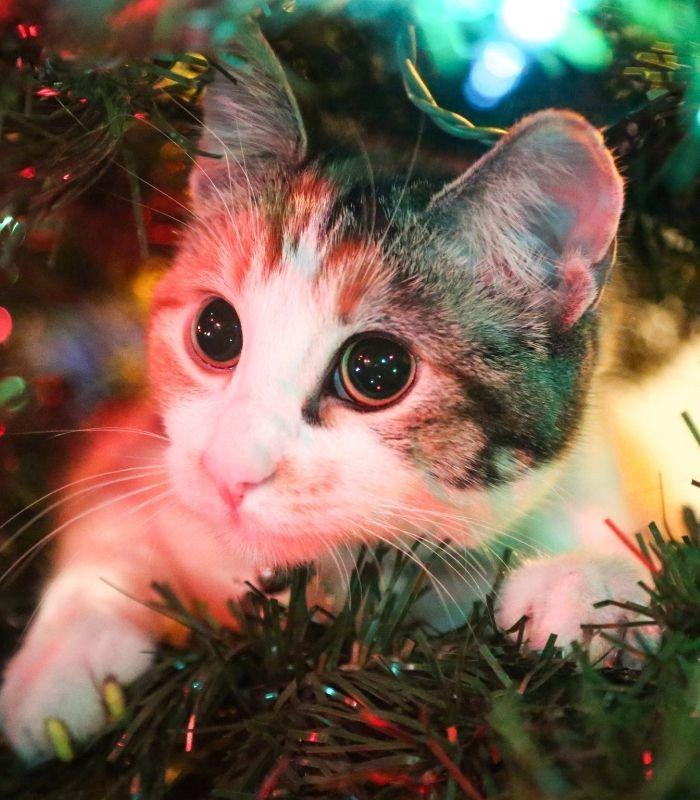 Kitten Caught in a Christmas Tree