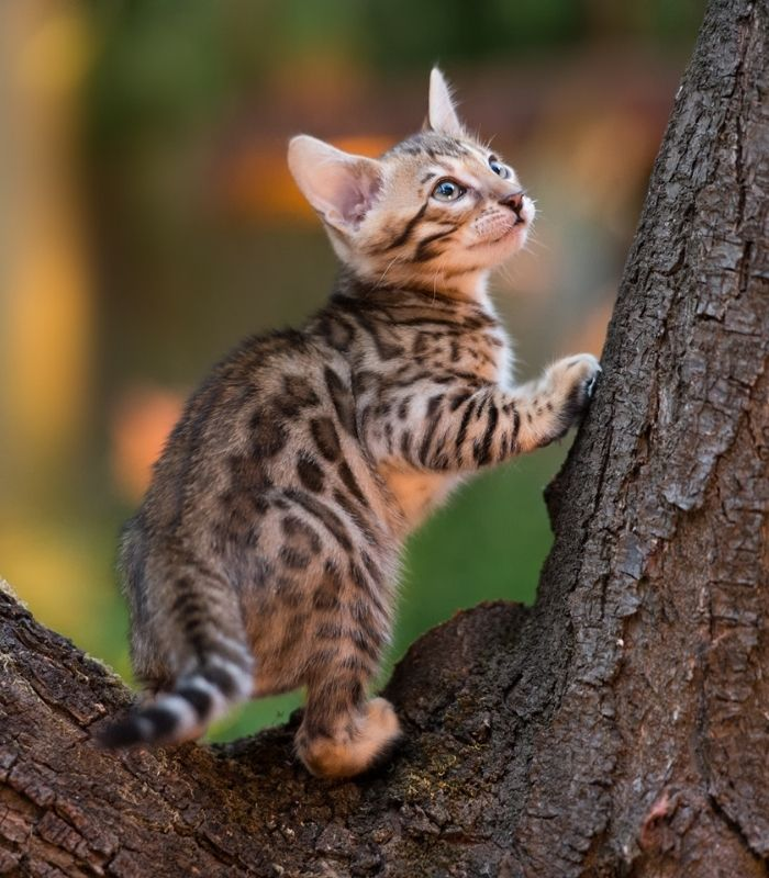 Kitten Playing in a Tree