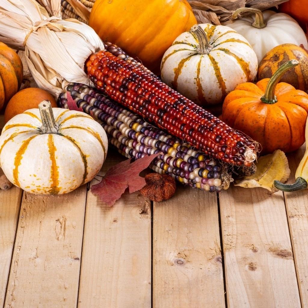 Mini Pumpkins and Indian Corn Decor