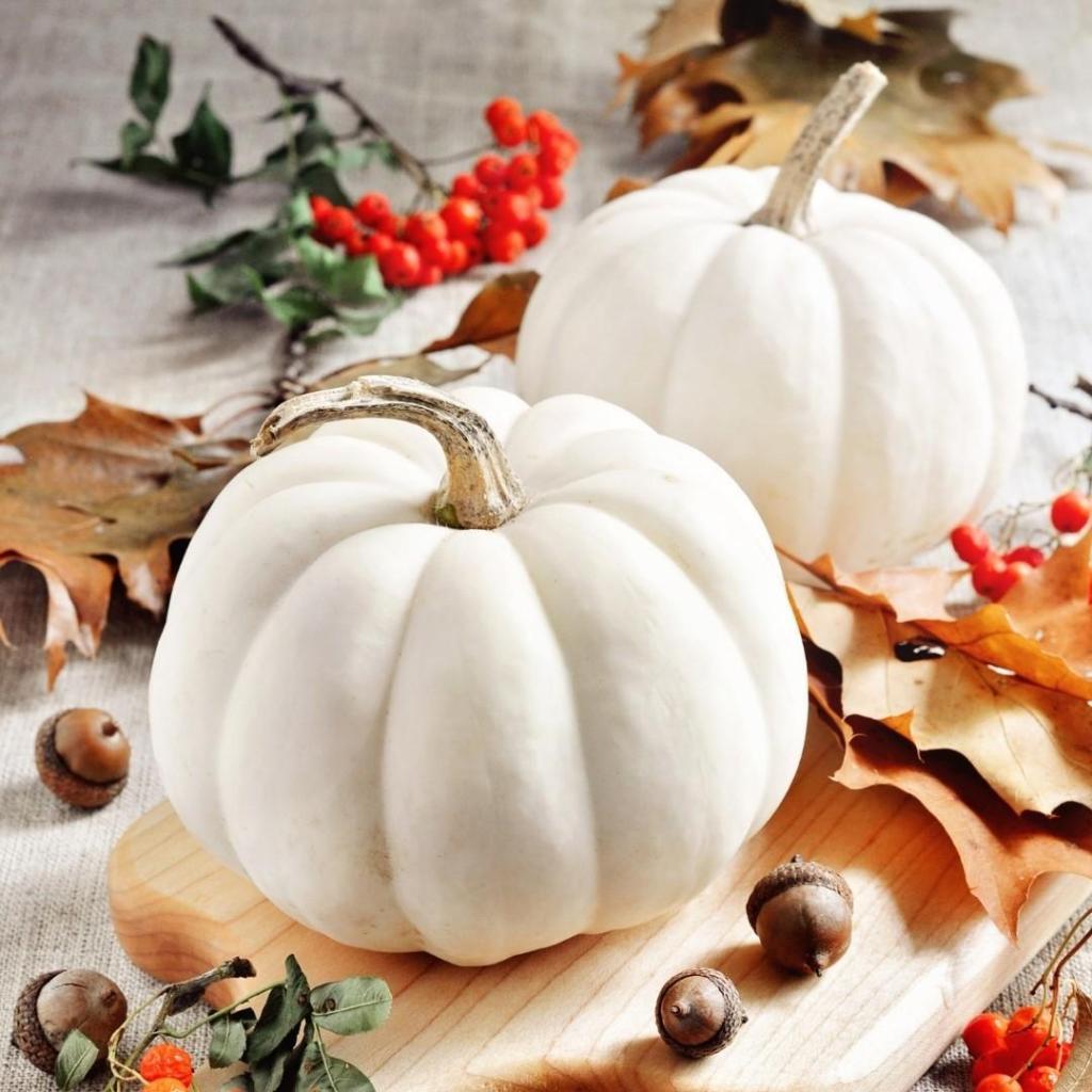 White Pumpkins Fall Decor Display