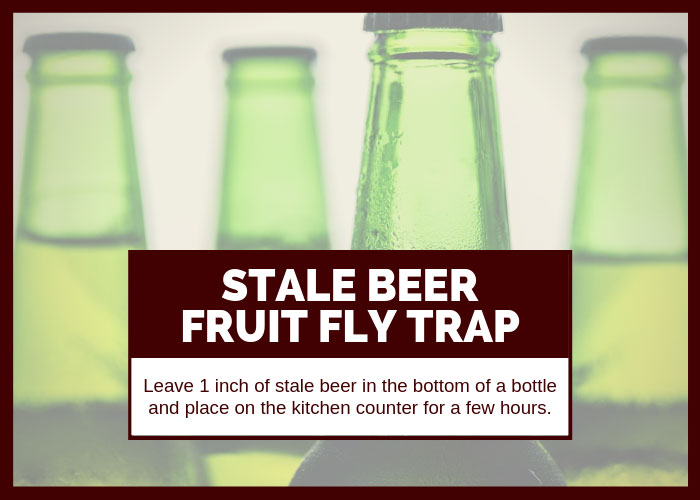 How to Get Rid of Fruit Flies Using Stale Beer