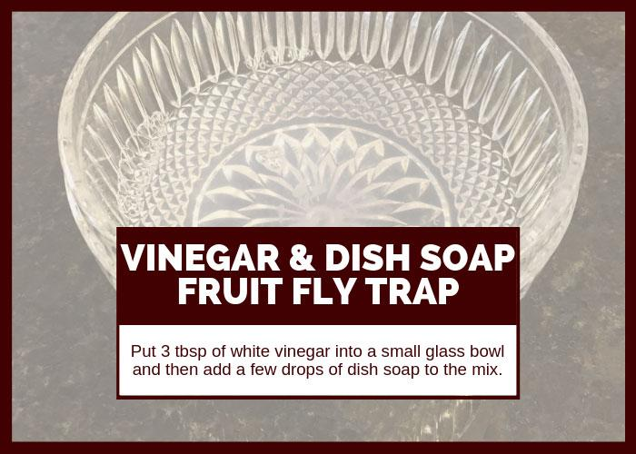 How to Get Rid of Fruit Flies Using Vinegr and Dish Soap