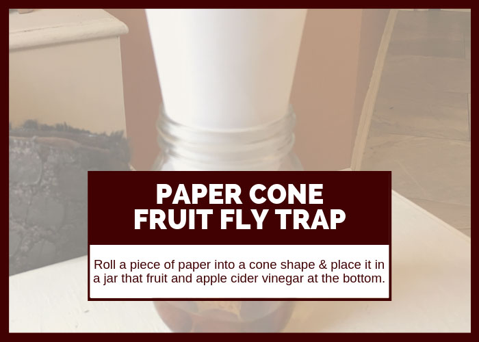 How to Get Rid of Fruit Flies Using a Paper Cone