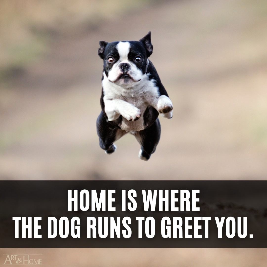 Home is where the dog runs to greet you.