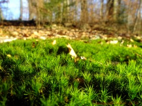 moss warm winter day
