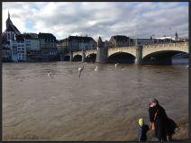 Basel Walking Tour January 2015 _ Mittlere Brücke birds feeding
