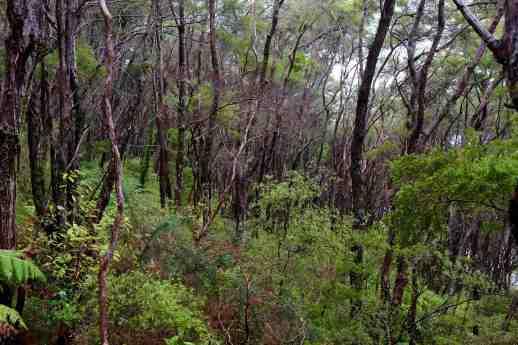 Dense bush of abel tasman