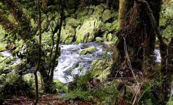 Riwaka River