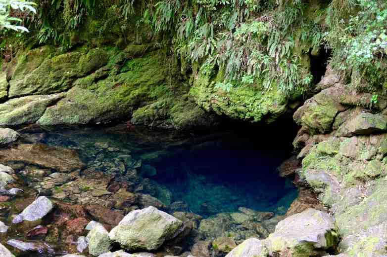 Resurgence park New Zealand