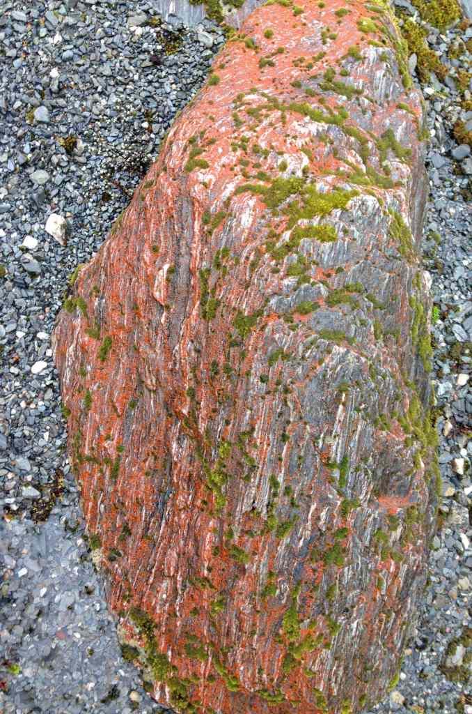 Vibrant orange moss