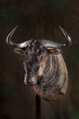 wildebeast-2