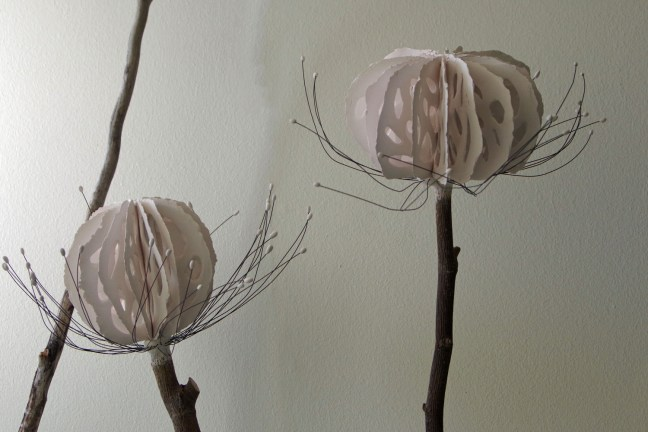 This is a detail image of two Umbel flower heads adhered to wood stems and displayed as part of the permanent collection at the Fish Factory Residency program in Stoovardfjordur Iceland. They were inspired by the wild Angelica flowers that grow in the region.