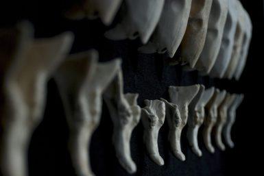 "The 10th International Exhibition of Small Form Porcelain"", Riga, Latvia (2015)"