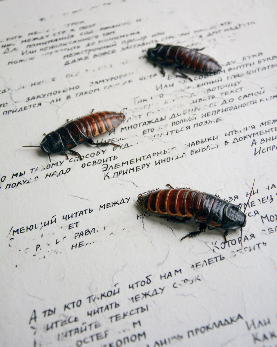The image contains a fragment of an installation with the use of porcelain, unbaked overglaze painting, which cockroaches eat during the exhibition