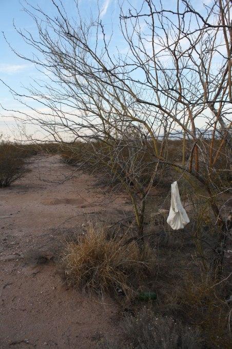 2014, Porcelain on Sonoran Desert