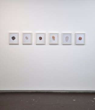 Installation shot, Inkjet print, ashwood, 2015