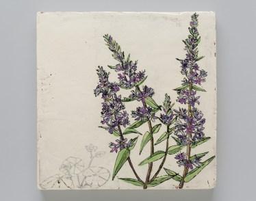 "Endangered/Invasive (Floating Marigold & Purple Loosestrife)"""