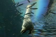 Under the Polar Bear