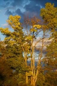 sun on the trees