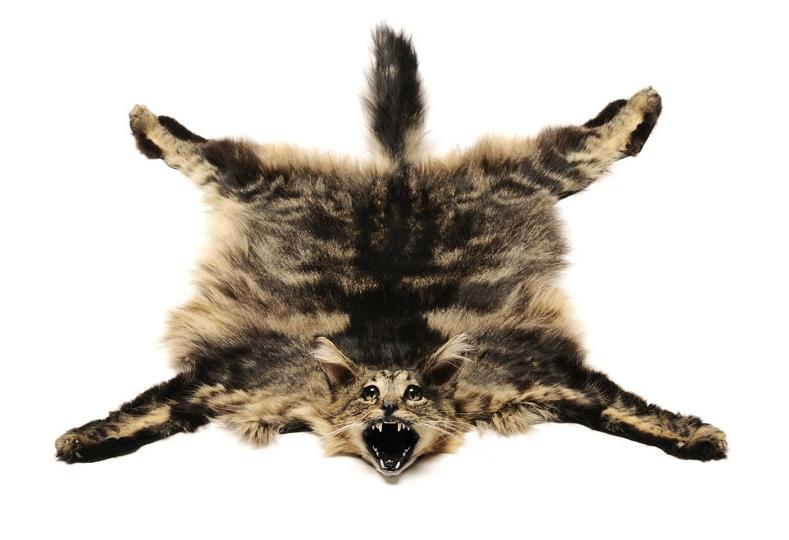 Julia de Ville. 'Cat Rug' 2008